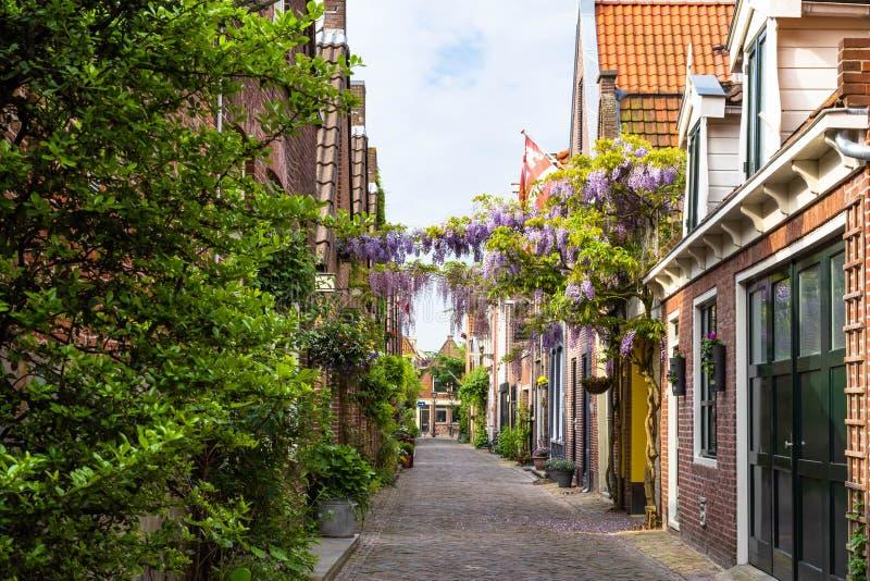 Die Straße von Blumen in Alkmaar lizenzfreies stockfoto