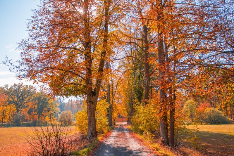 Die Straße zum Herbst lizenzfreie stockbilder