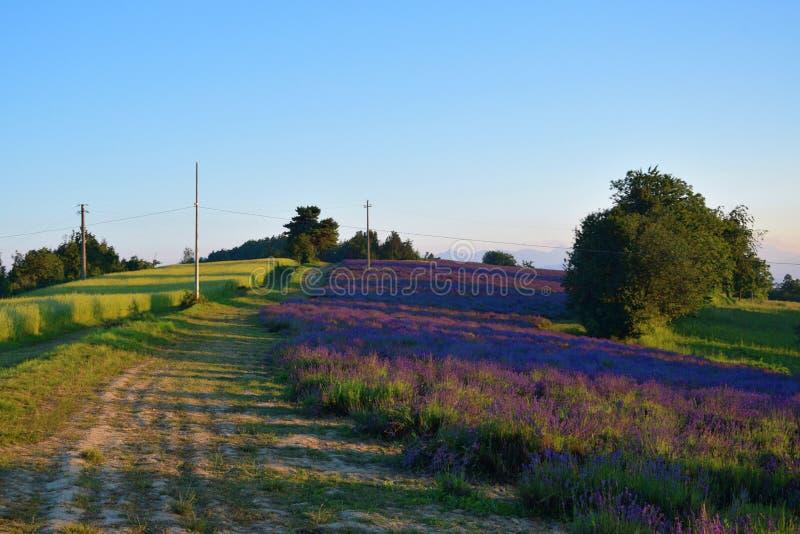 Die Straße zum Lavendelfeld stockfotos