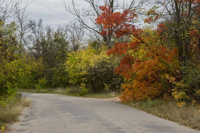 Die Straße, die zum Wald geht lizenzfreies stockfoto