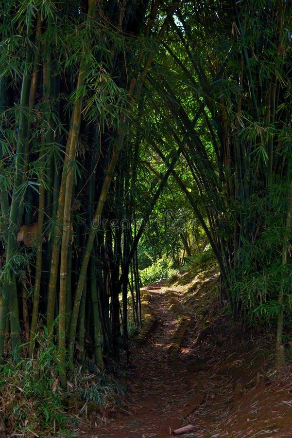 Die Straße zwischen dem Bambus lizenzfreies stockbild