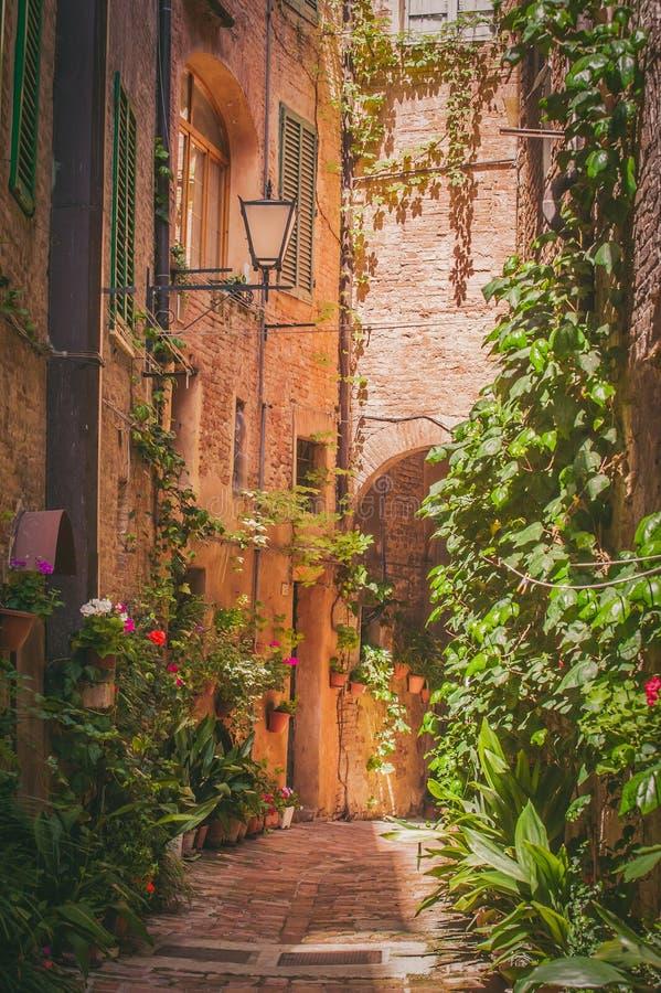 Die Straßen der alten italienischen Stadt von Siena lizenzfreie stockfotografie