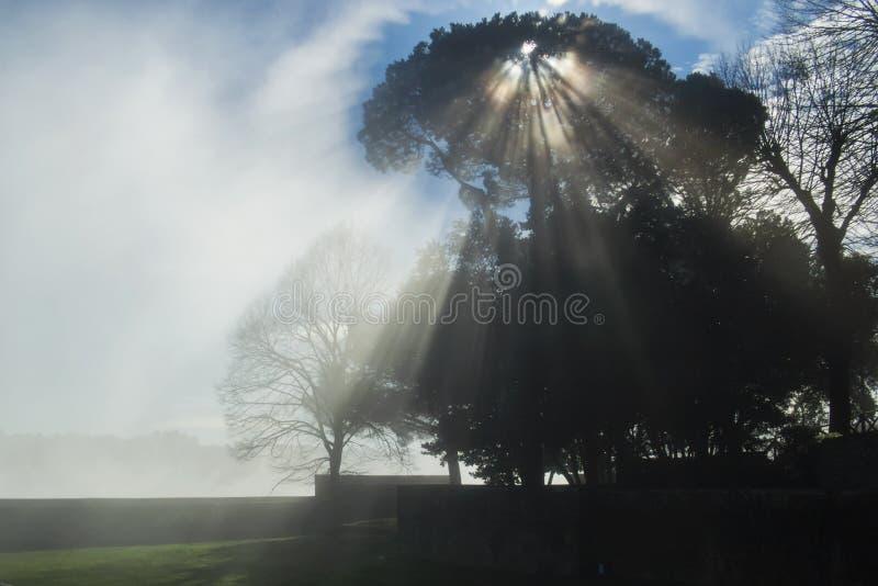 Die Strahlen der Sonne durch die Niederlassungen eines Baums stockbild