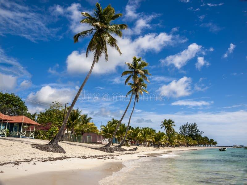 Die Strandfront in Saona-Insel in der Dominikanischen Republik lizenzfreie stockfotos