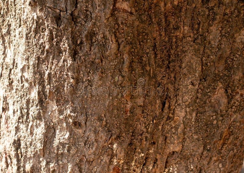 Die Struktur der Baumrinde Die Rinde ist braun lizenzfreie stockfotos
