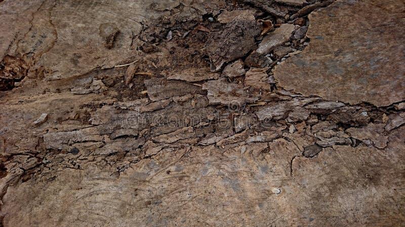 Die Struktur des Kapok Holzbrettes ist beschädigt stockfotos