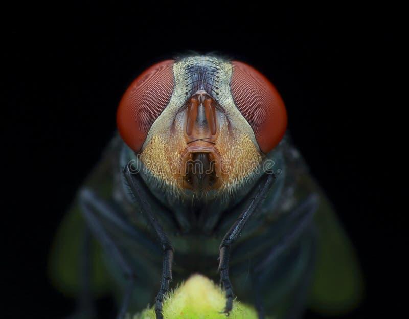Die Stubenfliege in der Dunkelheit lizenzfreies stockfoto