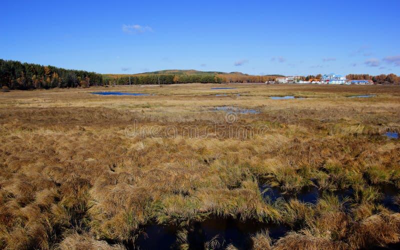 Die Sumpfgebietlandschaft stockfotografie