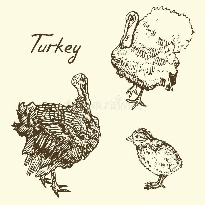Die Türkei-Vielzahl und Satz des jungen Geflügeltiers, Skizze in der Pop-Arten-Art lizenzfreie abbildung