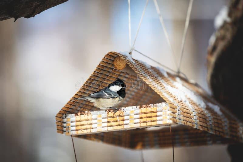 Die Tannenmeise oder das Parus ater, das im birdfeeder sitzt lizenzfreie stockbilder
