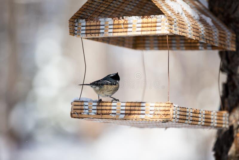 Die Tannenmeise oder das Parus ater, das im birdfeeder zurück zu der Kamera sitzt lizenzfreies stockbild
