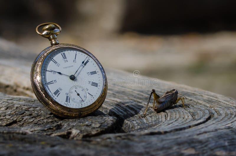 Die Taschen-Uhr und die Heuschrecke lizenzfreies stockbild