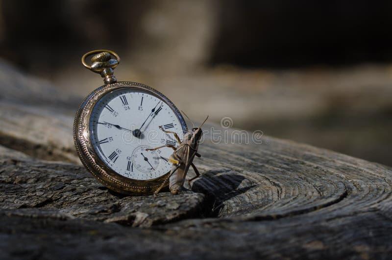 Die Taschen-Uhr und die Heuschrecke stockbilder
