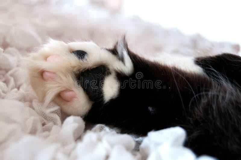Die Tatze der flaumigen Schwarzweiss-Katze auf einem weißen Stoff lizenzfreies stockbild