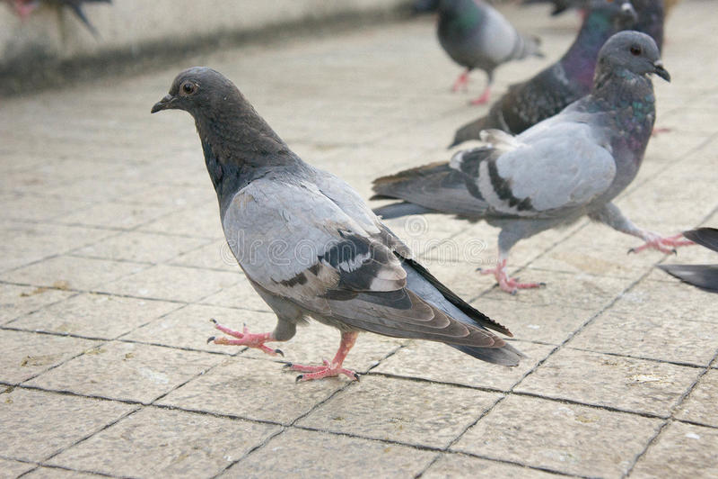Die Tauben auf der Wand im Park stockfotografie