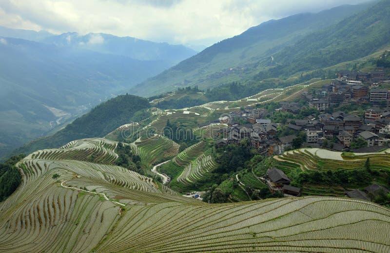 Die terassenförmig angelegten Reisfelder in autonomer Region Guangxis in China lizenzfreies stockbild