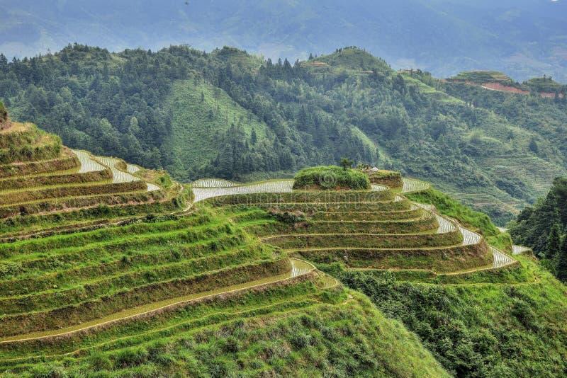 Die terassenförmig angelegten Reisfelder in autonomer Region Guangxis in China stockfotografie