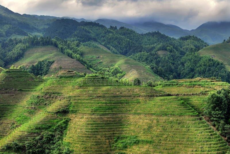 Die terassenförmig angelegten Reisfelder in autonomer Region Guangxis in China lizenzfreies stockfoto