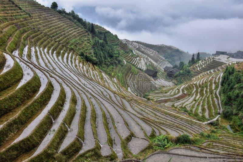 Die terassenförmig angelegten Reisfelder in autonomer Region Guangxis Zhuang in China lizenzfreies stockbild