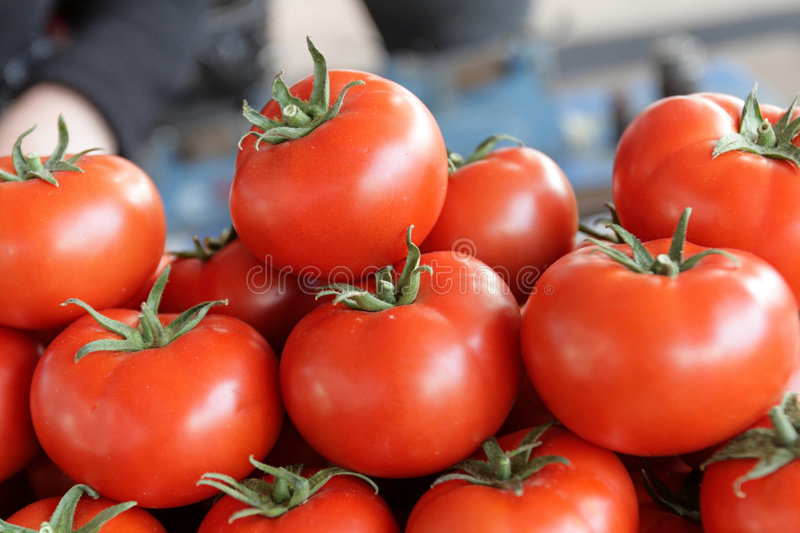 Die Tomaten stockfotos
