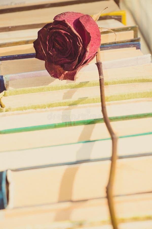 Die Trockenblume der roten Rose liegt auf den Büchern stockbilder