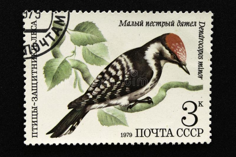 Die UDSSR-Briefmarke, Reihe - Vögel - Demonstranten des Waldes, 1979 stockfoto