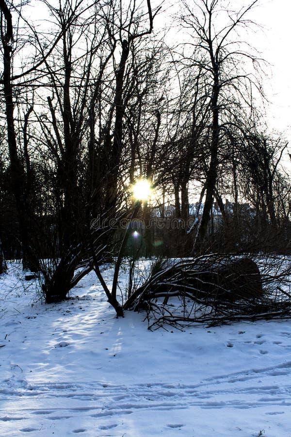 Die untergehende Sonne im Wald lizenzfreie stockfotografie