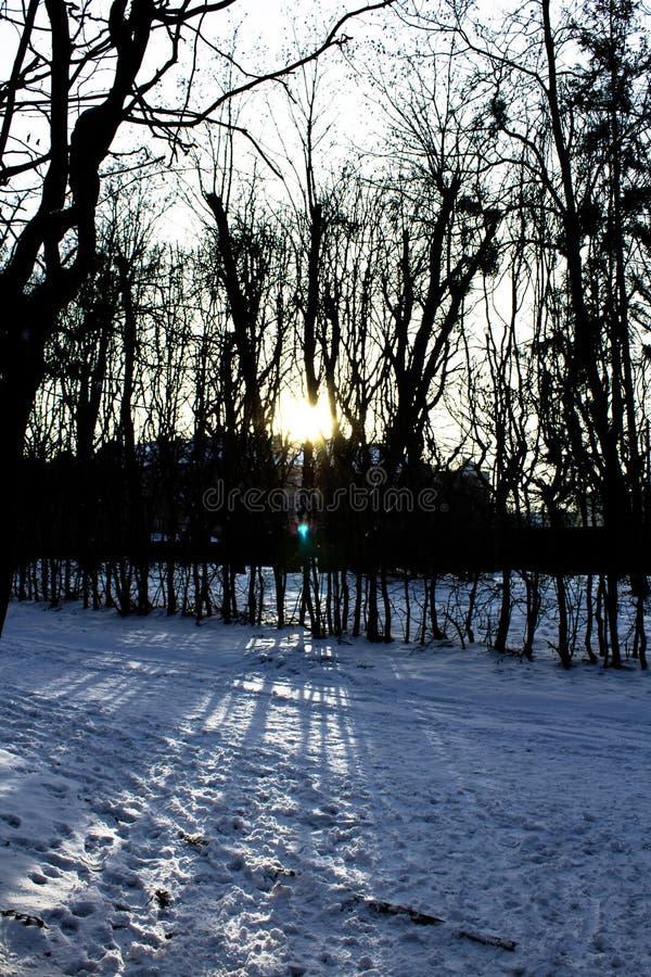 Die untergehende Sonne im Wald stockbilder