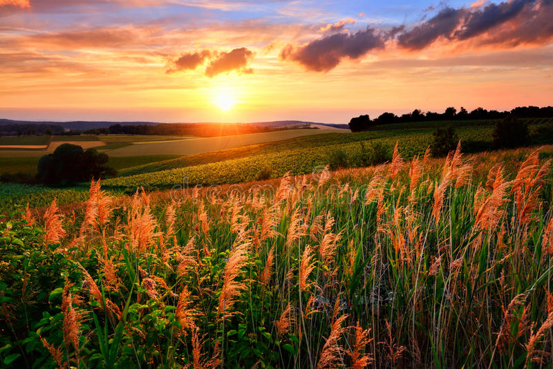 Die untergehende Sonne malt das Himmel- und Vegetationsrot lizenzfreies stockbild