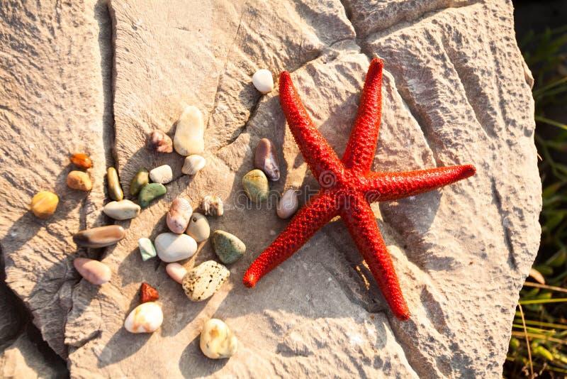 Die Unterwasserwelt des adriatischen Meeres stockfotos