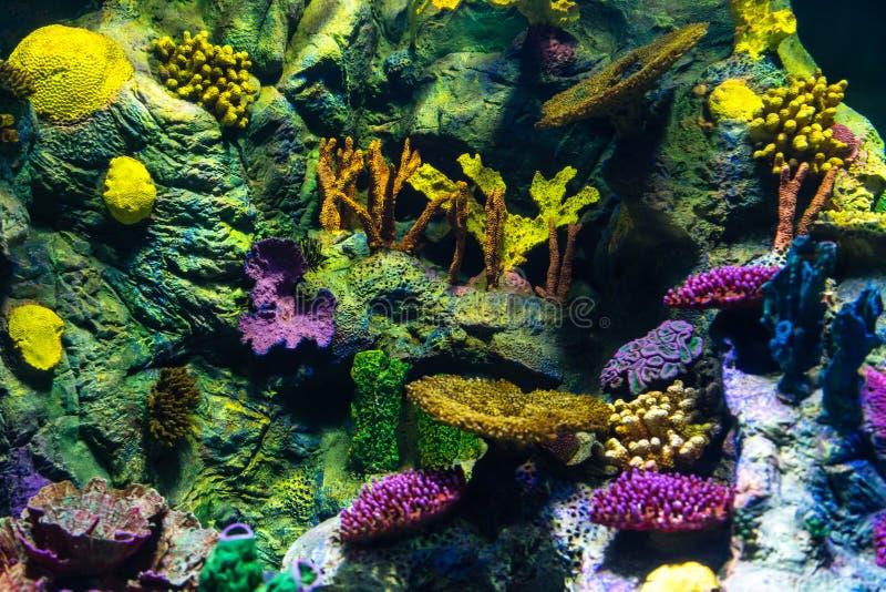 Die Unterwasserwelt des tropischen Meeres Hintergrund stockfotografie