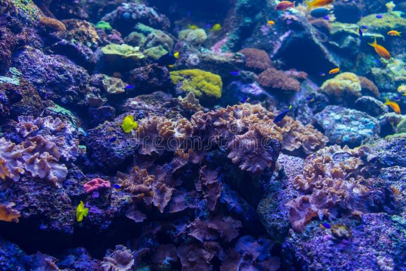 Die Unterwasserwelt des tropischen Meeres Hintergrund lizenzfreie stockfotografie