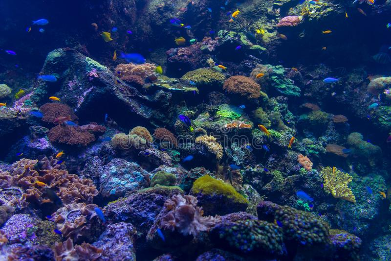 Die Unterwasserwelt des tropischen Meeres Hintergrund lizenzfreie stockbilder