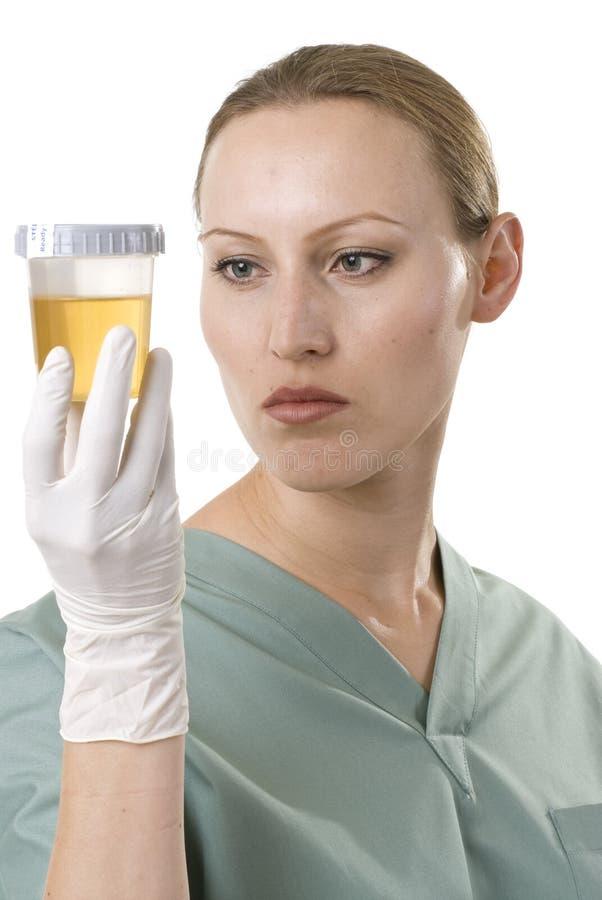 Die Urinprobe stockbilder