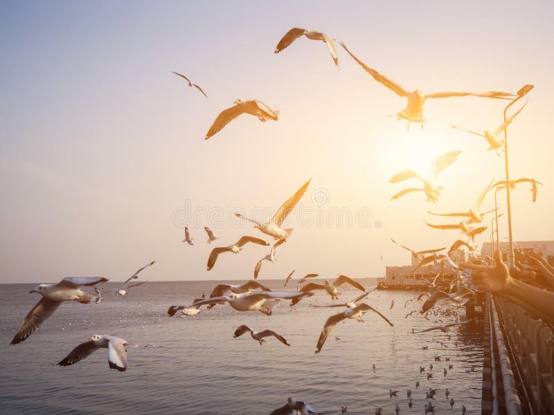 Die Vögel fliegen stockfoto