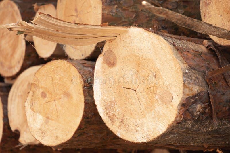 Die verringerten Stämme der Kiefer gestapelt in einem Haufen, Lagerung des Holzes zu uns stockfotos