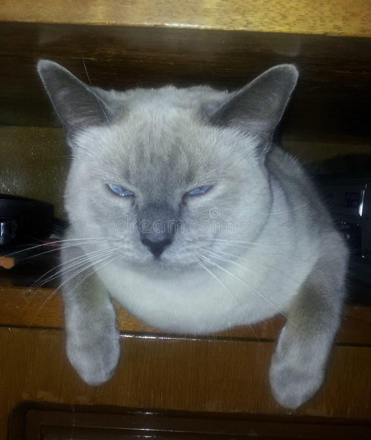 Die verschrobe Katze lizenzfreie stockbilder
