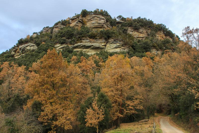 Die Vielfalt von Farben am Ende des Herbstes lizenzfreie stockfotos