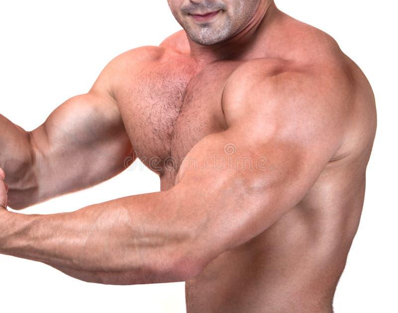 Die vollkommene muskulöse männliche Karosserie stockfotografie