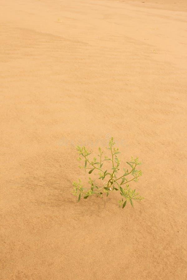 Die Wüste lizenzfreies stockfoto