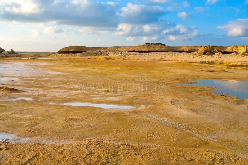 Die Wüste nachdem dem Regnen lizenzfreie stockbilder