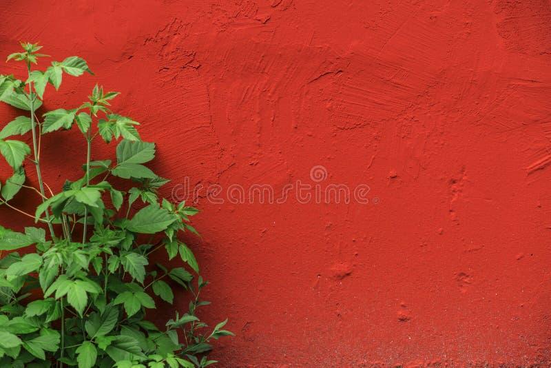 Die Wandbeschaffenheiten stockfoto