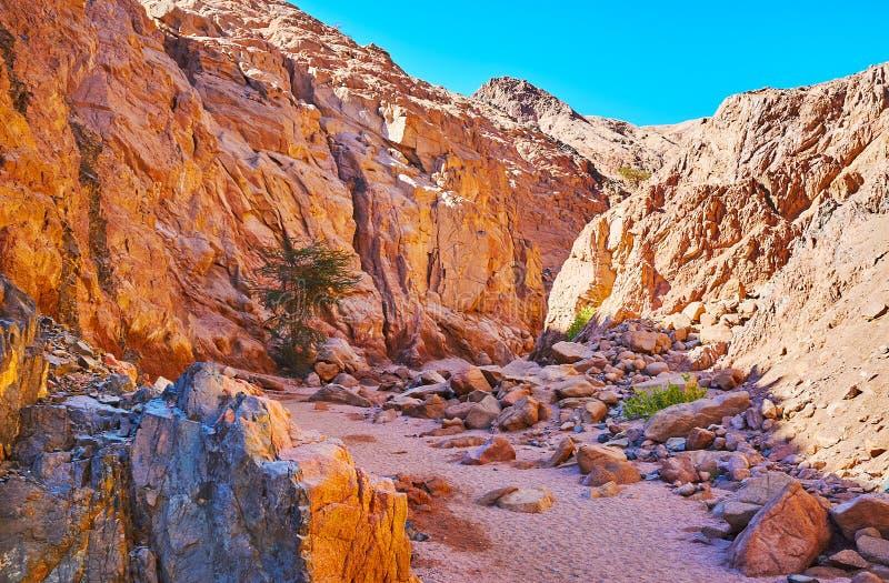 Die Wanderung zu Sinai-Wüste, Ägypten lizenzfreies stockfoto