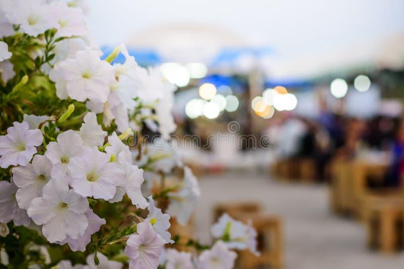 Die weiße Blume gegenüber von dem Nachtabendessenmarkt stockfotos
