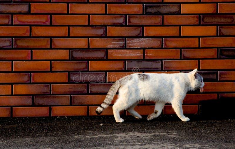 Die weiße Katze, die auf die Straße geht, wird um Tokyo, Japan genommen Es wurde in der Sommersaison dargestellt Die Welt ist gen lizenzfreie stockfotografie