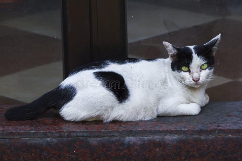 Die weiße Katze liegt auf dem Grundschauen stockbild