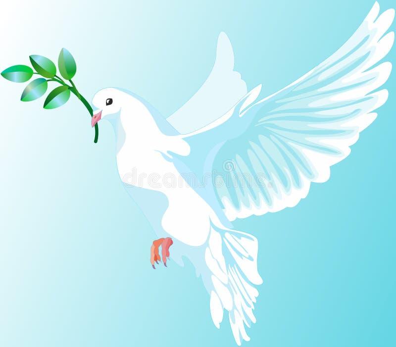 Weiße Taube Frieden