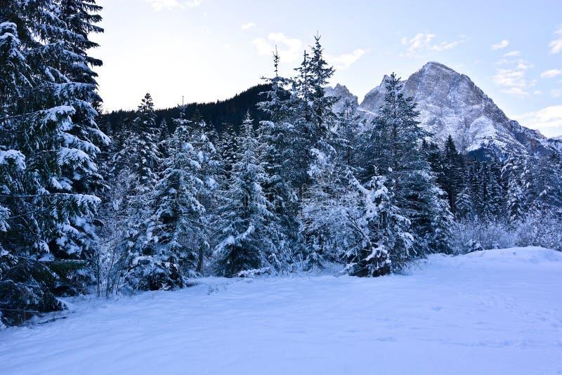 Die weißen Schneedecken alles, Holz und Wälder stockfotografie