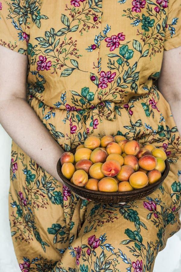 Die weiblichen Hände, die frische reife Aprikosen halten, rollen Retro- Art lizenzfreie stockbilder