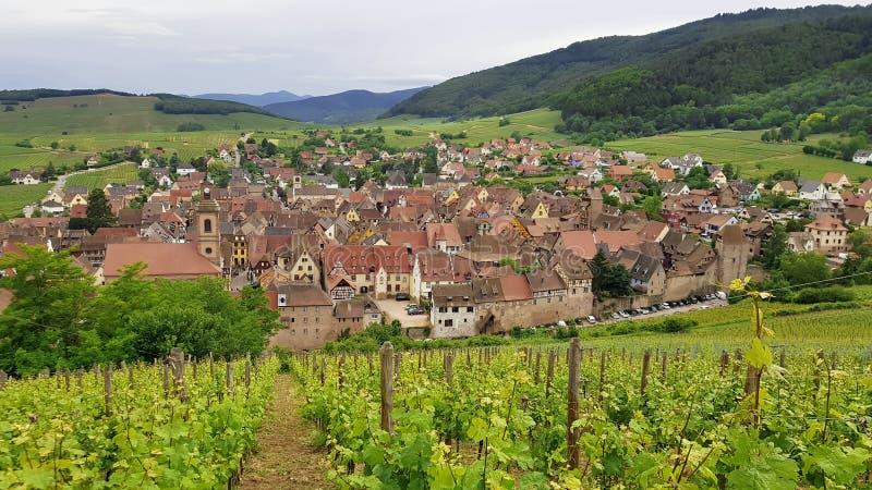 Die Weinberge von Riquewihr in Elsass, Frankreich lizenzfreies stockbild